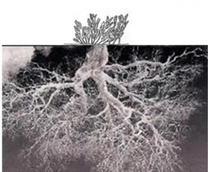 The underground roots