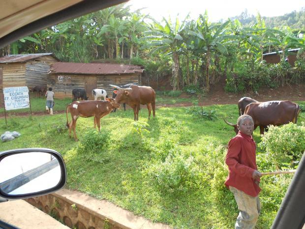 Land tenure and rural development
