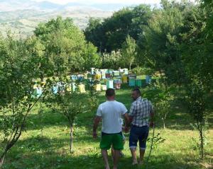 Aurel Nita, a bee-keeper in Posesti