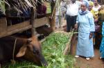 One of the ladies involved in Juliana Swai's group where ladies - often alone - have been given a cow to start farming