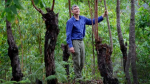 Tony Rinaudo standing among trees in East Timor